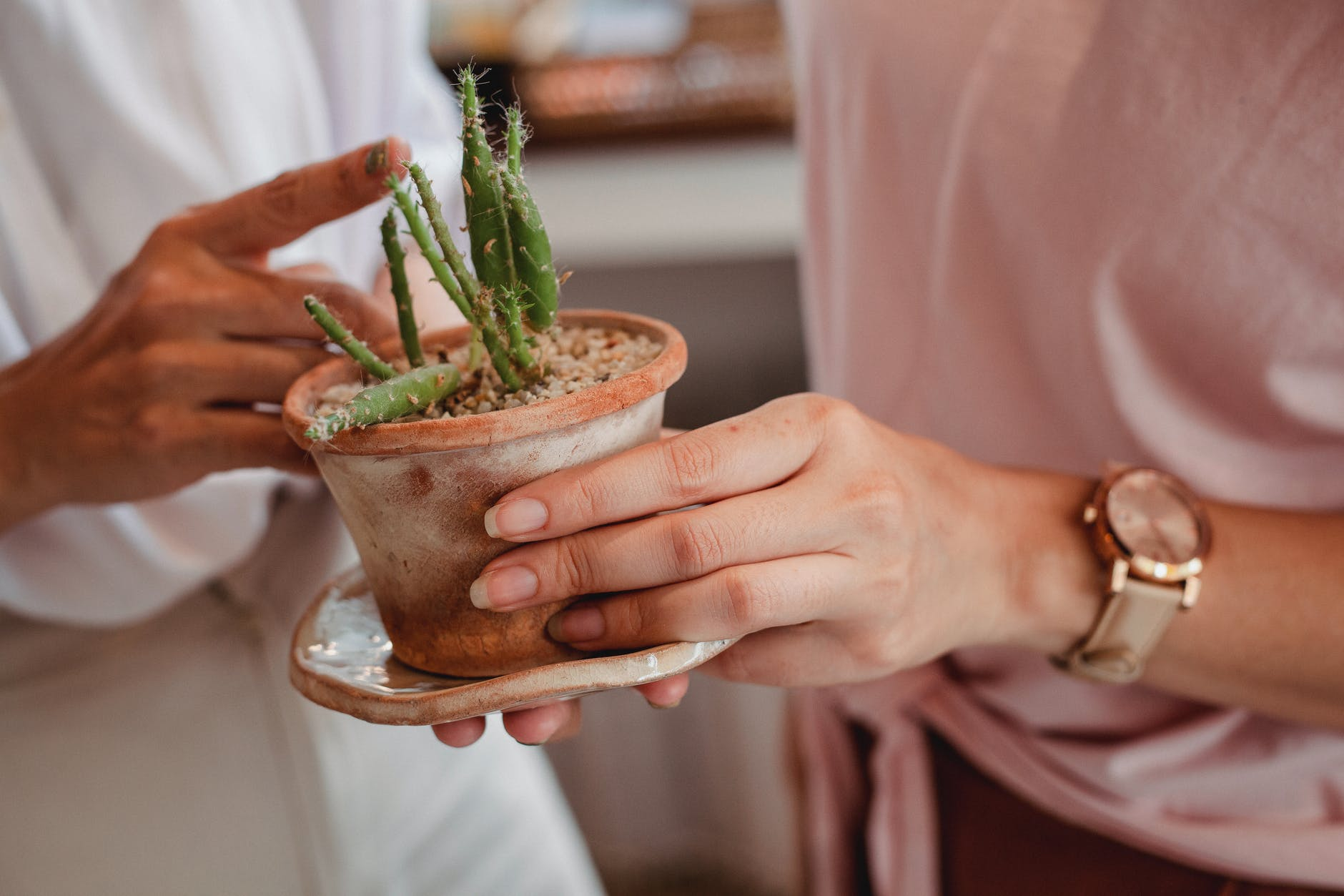 crop women with potted cactus