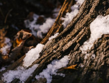 trunk of tree under snow in forest